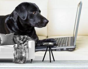 Adorable Dog Using Computer Wall Mural