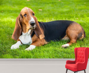 Lazy Basset Hound on the Grass Wall Mural