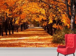 Beautiful Autumn Trees Wall Mural