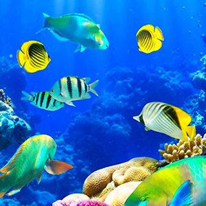 Ocean life & Underwater